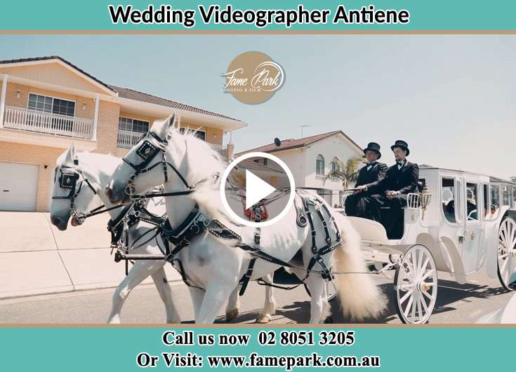 The wedding carriage Antiene NSW 2333